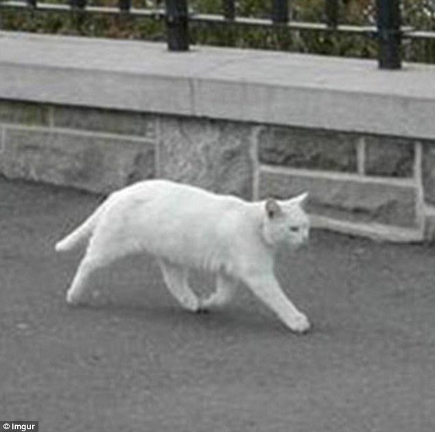 Настоящий кот в Google Streetview