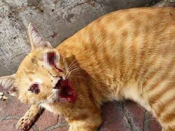 Kucing Ini Dianiaya Dengan Sangat Kejam. Bangsat Punya Manusia!!