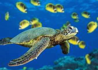 Las tortugas en los sueños