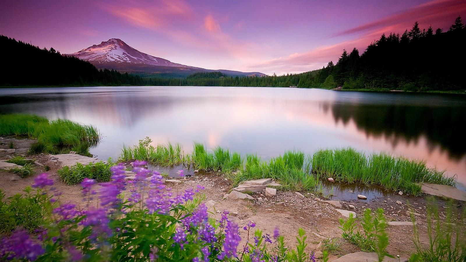 Beautiful Nature Landscape Flowers