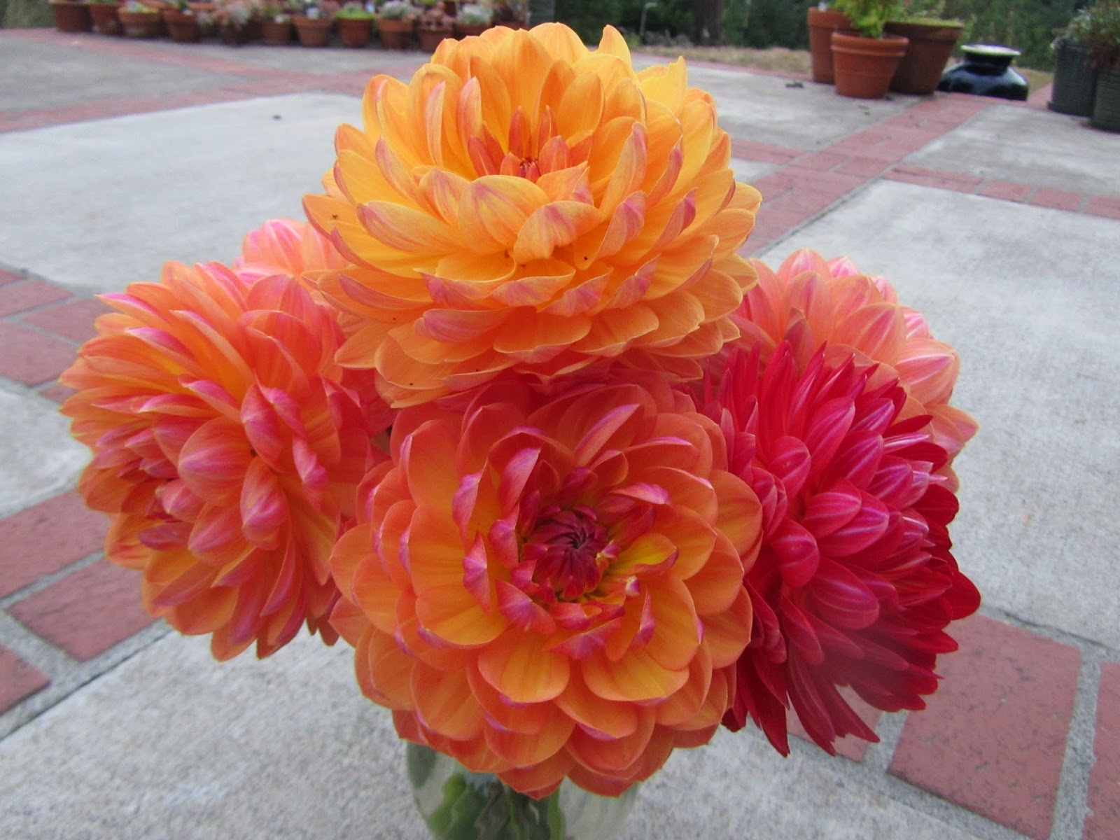 Lane County Dahlia Society April Tuber Auction And Sale
