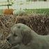 Τι κάνουν τα κουτάβια το φθινόπωρο! Δείτε το βίντεο...