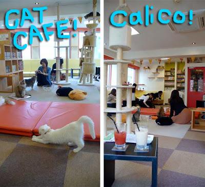 cat-cafe-japan-01