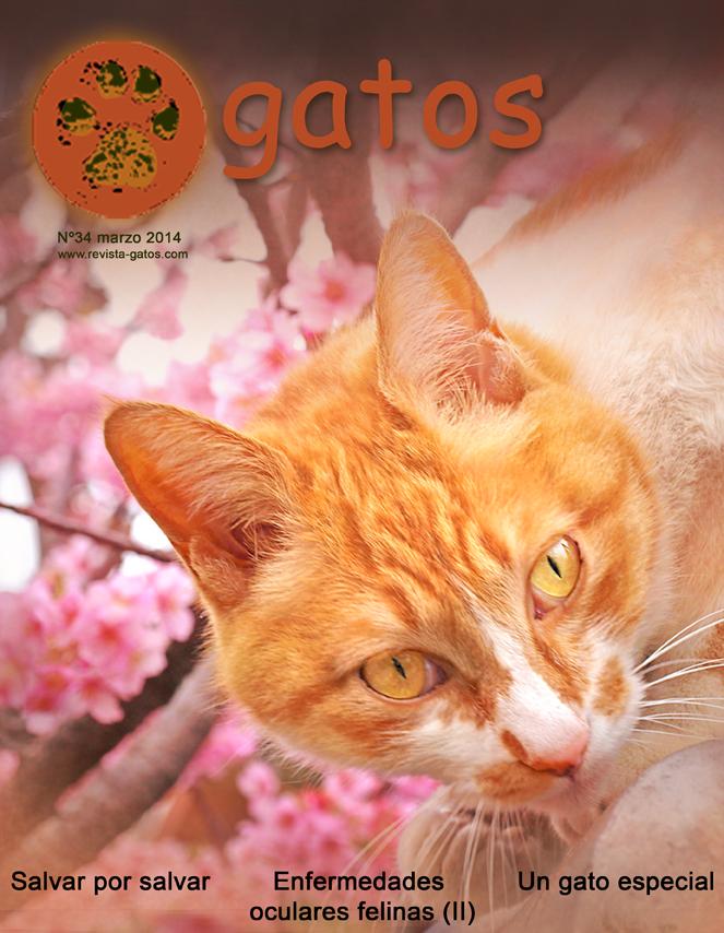 Nº 34 Revista Gatos