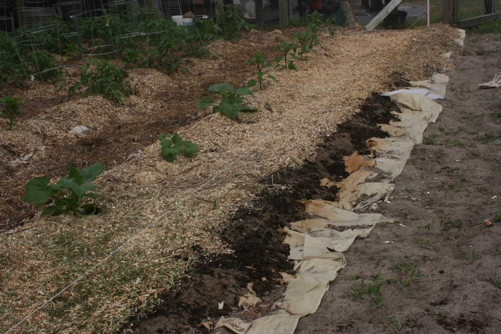 Challenged Survival: Back to Eden Garden Project
