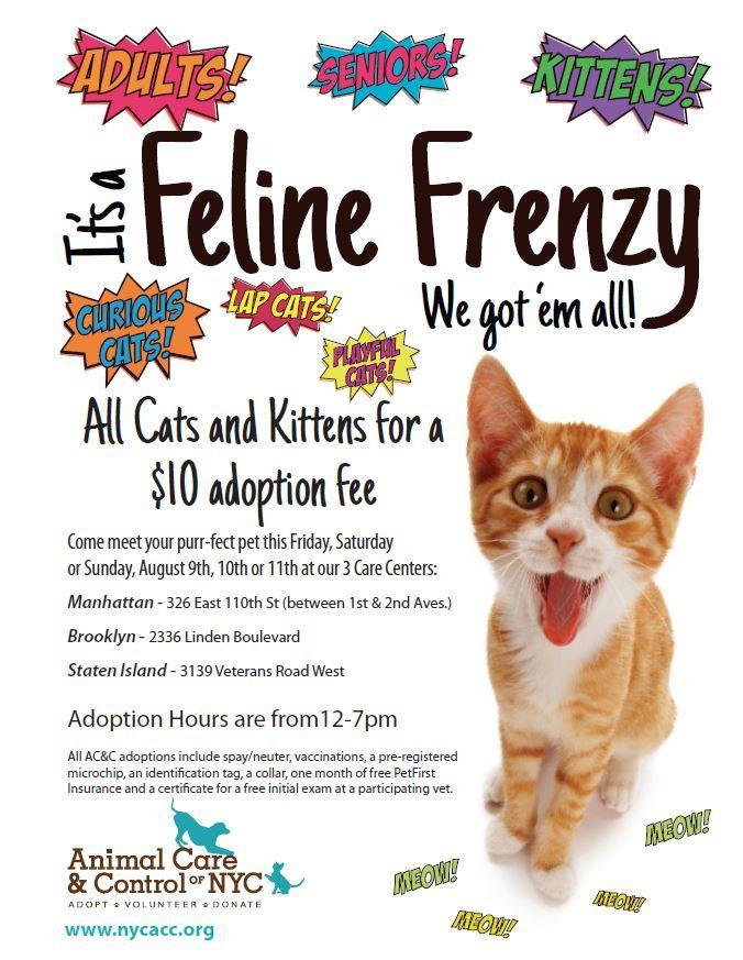 Pet Adoption Centers Staten Island