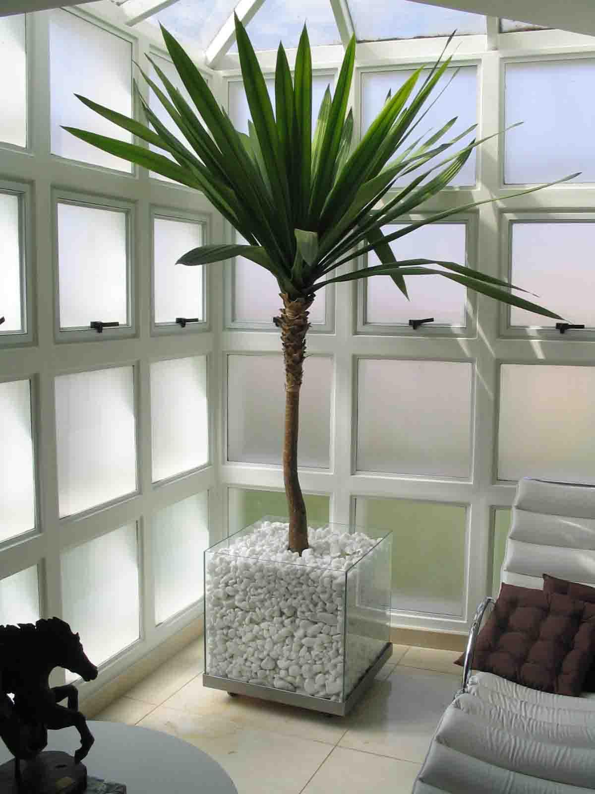 Plantas e vasos para interiores pictures - Plantas de interior ...