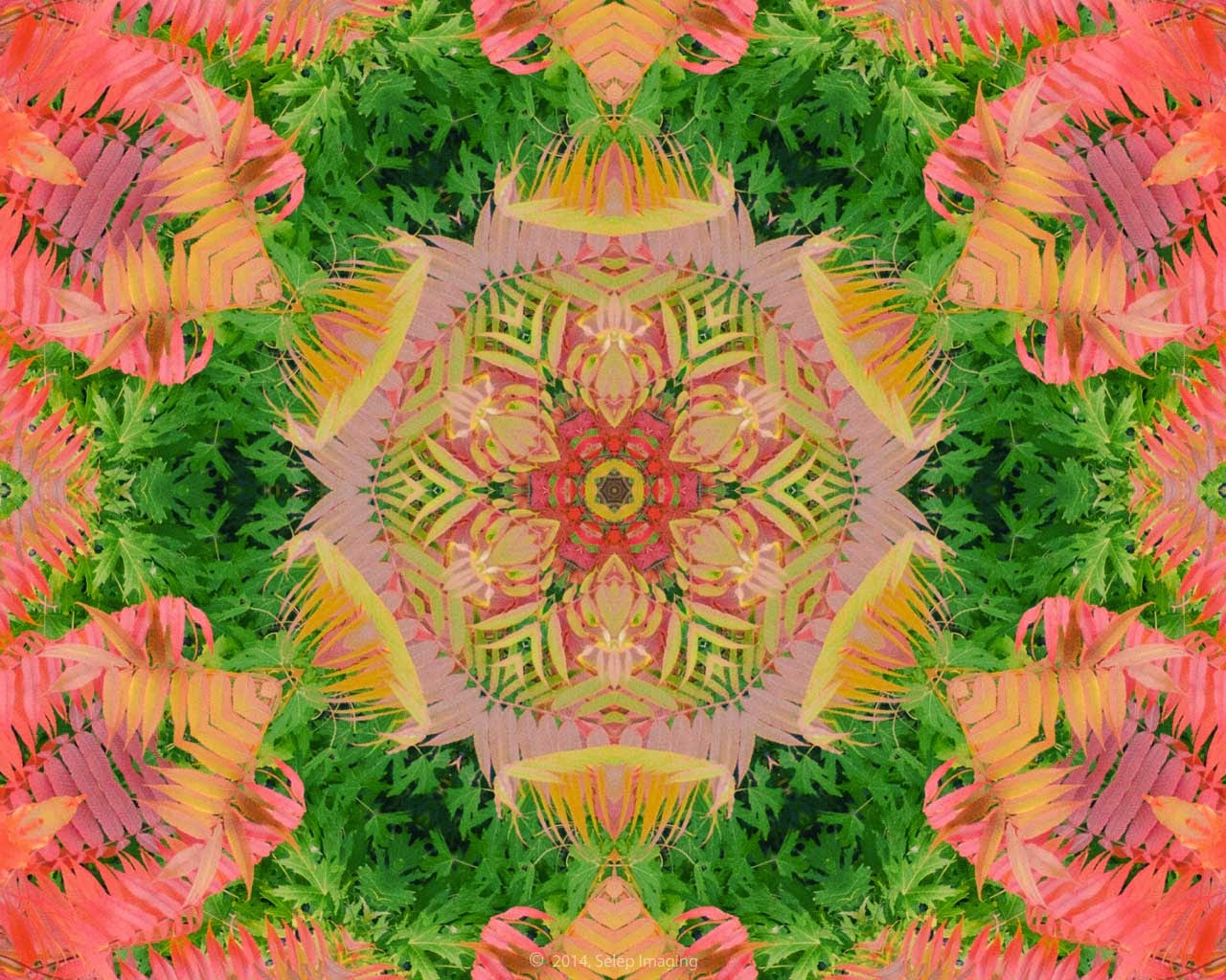 Kaleidoscope Photo Art sumac by Jeanne Selep