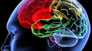 5 Kebiasaan Yang Ternyata Dapat Merusak Sel Otak
