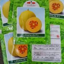 Benih, Bibit, Unggul, Melon, Panah Merah, Harga, Murah, Melon Kuning, Tahan Virus
