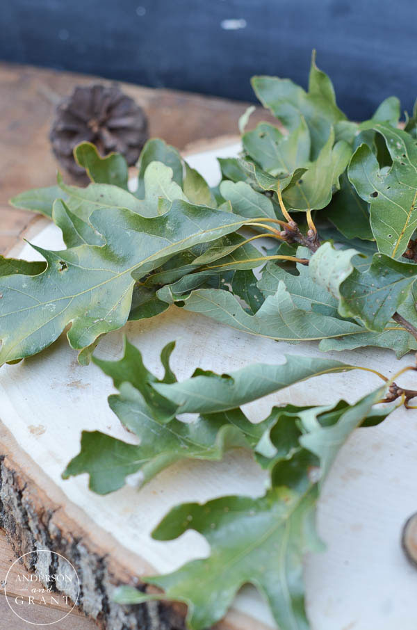 Maintain the green color of fallen oak leaves by laying them out flat to dry.  ||  www.andersonandgrant.com