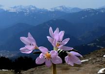 ΕΥΡΥΤΑΝΙΑ