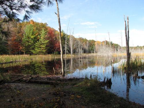 Tank Creek headwaters