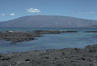 Volcan Darwin Shield Volcano on Isabela, Galapagos Islands