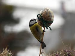 Kŕmidlá pre vtáky