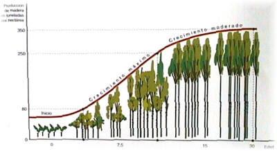 Caminando por el bosque recuperacion de bosque incendiados for Cuanto mide un arbol