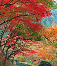 Buscándole siempre el Color a la Vida