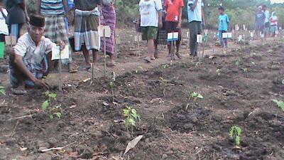 Holtikultura (Ternak Cabe)