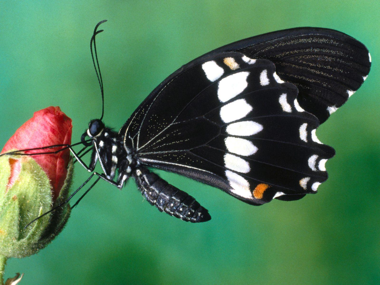 http://2.bp.blogspot.com/-xTCtMKZpdpI/TnuYMdtvcEI/AAAAAAAAEOA/50x1nvGnzLc/s1600/Flowers-Butterfly-1-.jpg