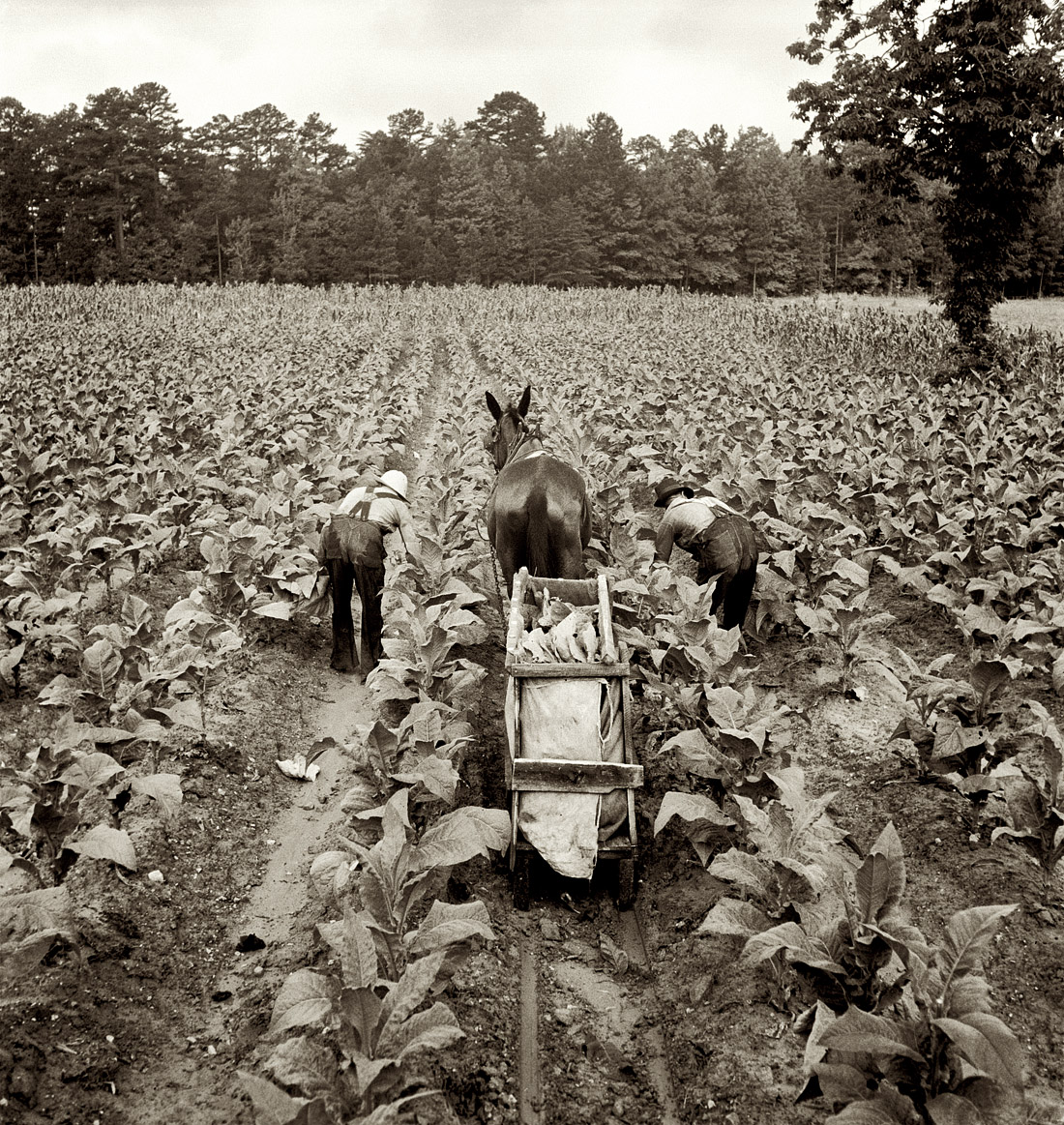 Farm security administration pictures Migrant Mother, 1936 - EyeWitness to History