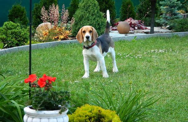 Domáce cvičisko pre psíka