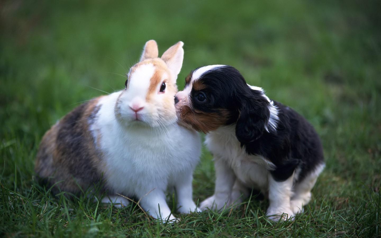 http://2.bp.blogspot.com/-xTFKzKNXbiE/UIV4ARuteBI/AAAAAAAAEIY/CRzUO1yyMcM/s1600/Rabbit+(6).jpg