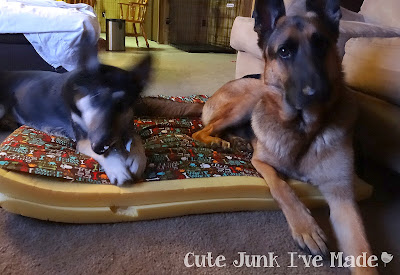 Zeke and Pepper playing on unfished dog bed