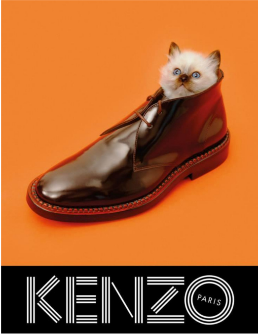 Kenzo Fall 2013 cat in shoe campaign