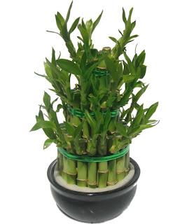 magie de l 39 envo tement retour d 39 affection le feng shui et les plantes. Black Bedroom Furniture Sets. Home Design Ideas