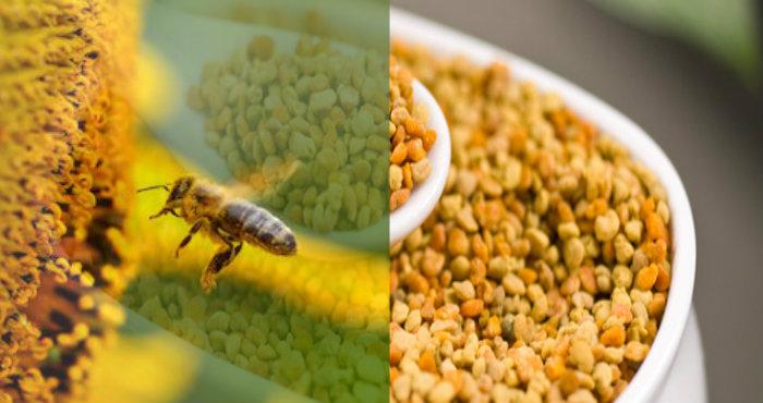 Manfaat Bee Pollen Meningkatkan Sistem Imun Anak