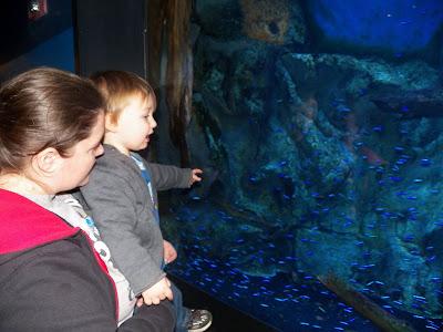 Aquarium Picture 6