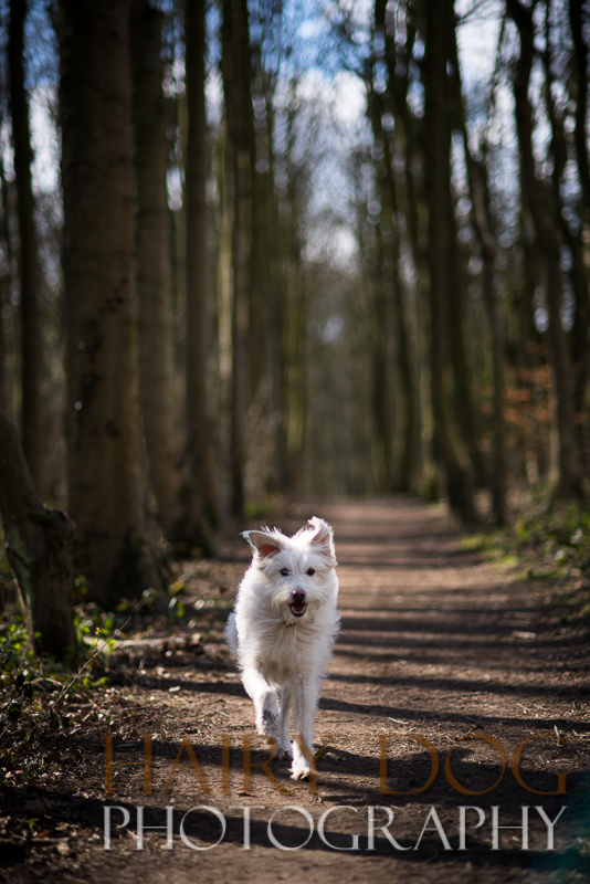 Specialist action photography of pets by hairy dog photography