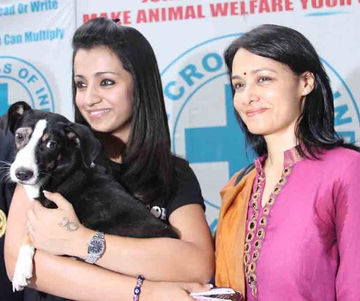 amala & trisha at blue cross building launch hot photoshoot