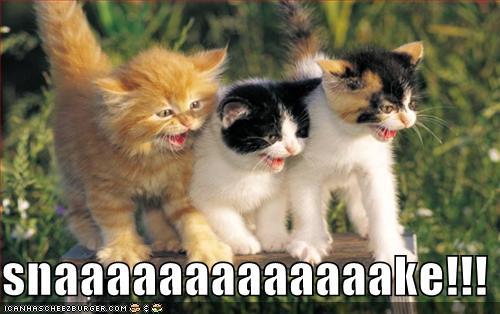 not i said the cat