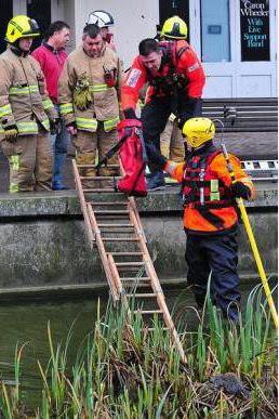 بالصور سبعة رجال إطفاء لإنقاذ سنجاب