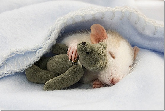 Cute baby mouse animal