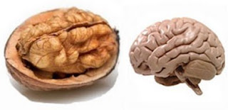 Walnut is linked with Brain