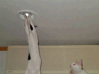 cat changing light bulb