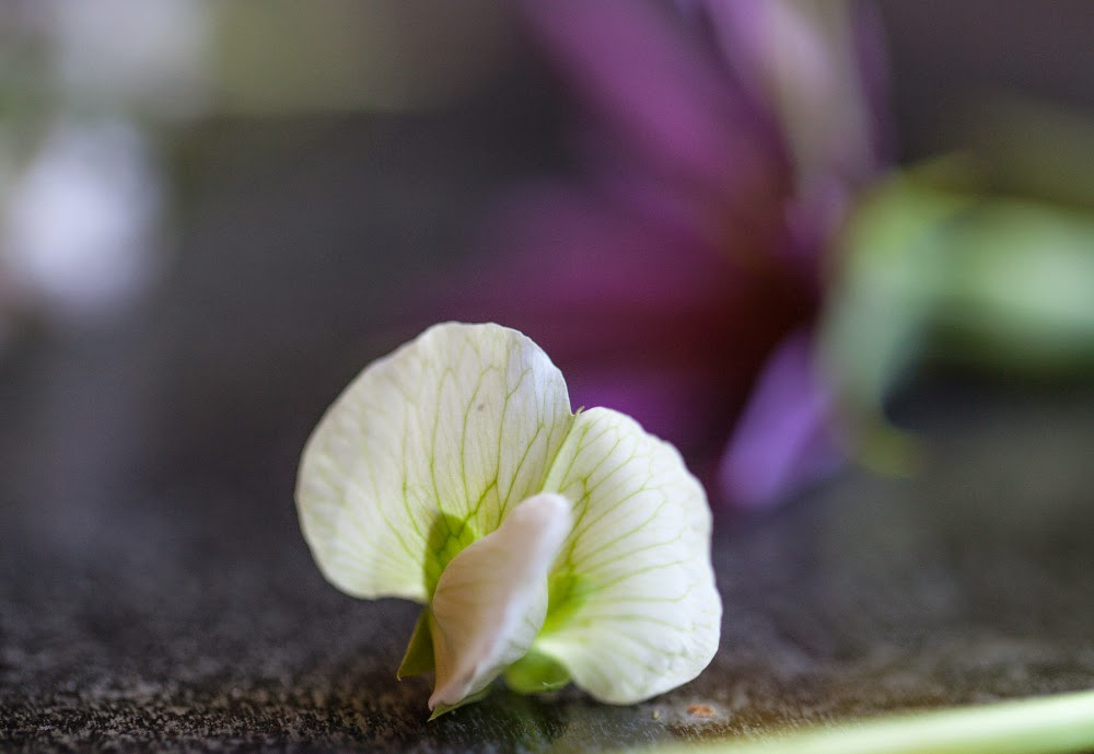 Crackers on the Couch: Edible Flowers, Little Marvel Pea Blossom