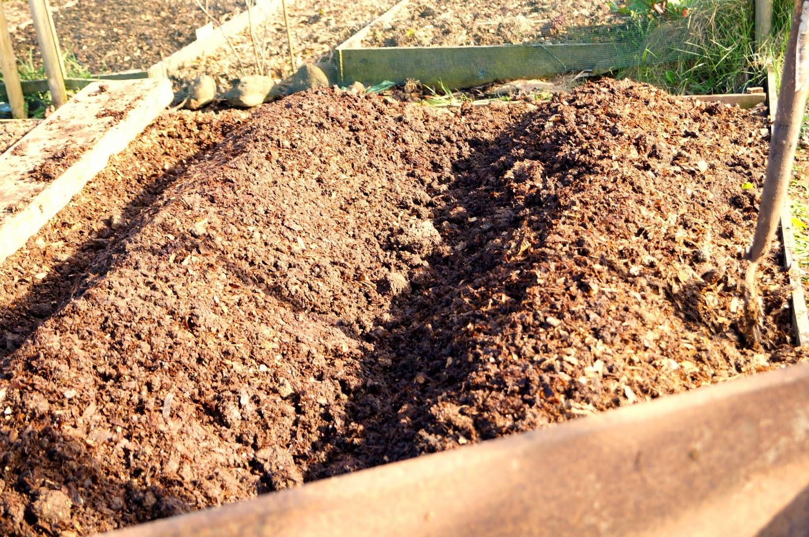two ridged rows of potatoes ~ growourown.blogspot.com