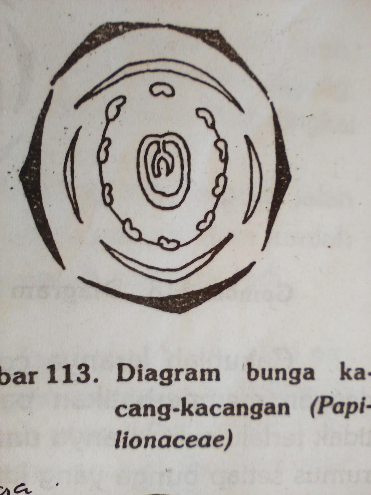 Morfologi tumbuhan suku papilionaceae misalnya orok orok kembang telang clitoria tarnatea ccuart Choice Image
