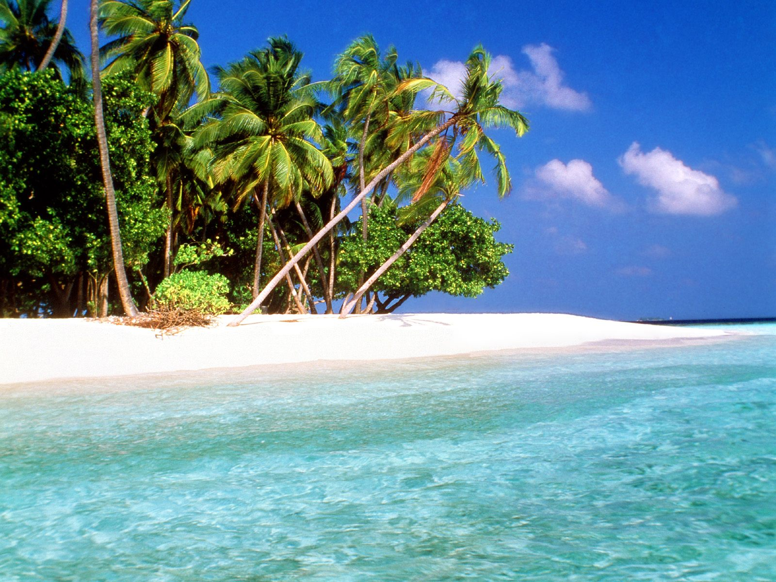 World visits tropical island beach wallpaper free review for Beautiful beaches in la