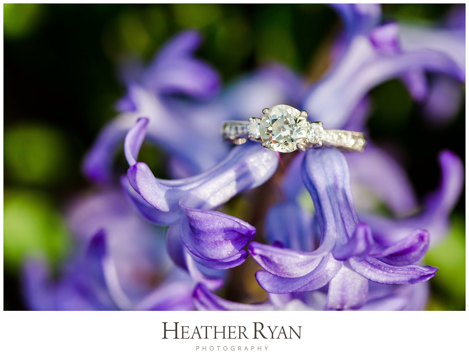 Bishops Garden Engagement Photos | Photos by Heather Ryan Photography