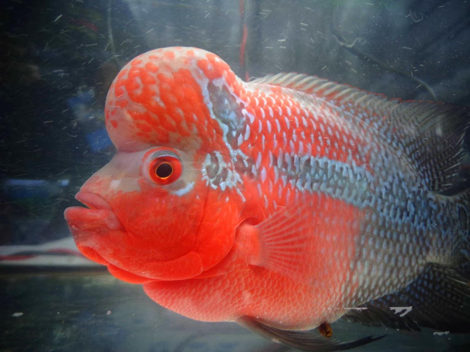 Aqua life Colorful fish exhibition Pune 2013 - Pune & I