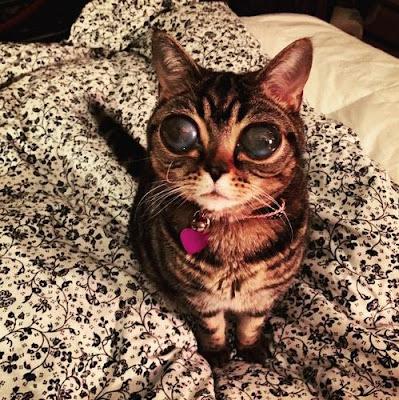 Matilda, Si Kucing Bermata Mirip Alien