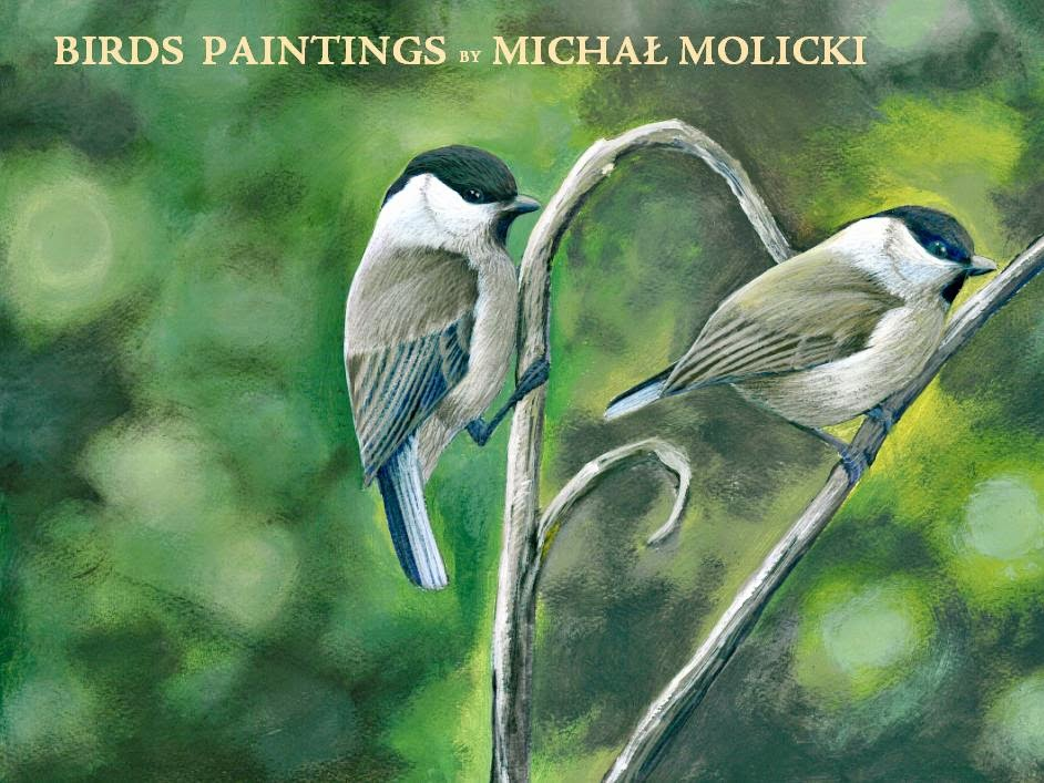 BIRDS PAINTINGS by MICHAŁ MOLICKI