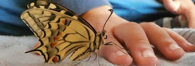 manina e farfalla