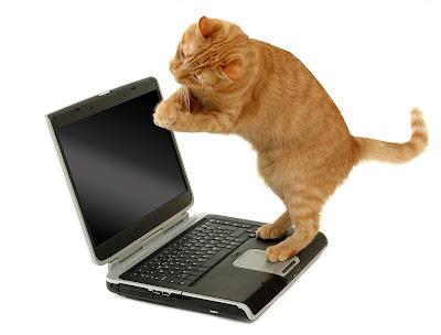 fotografías de gatitos para ver, disfrutar y compartir