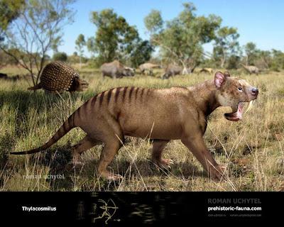 dientes de sable de argentina Thylacosmilus