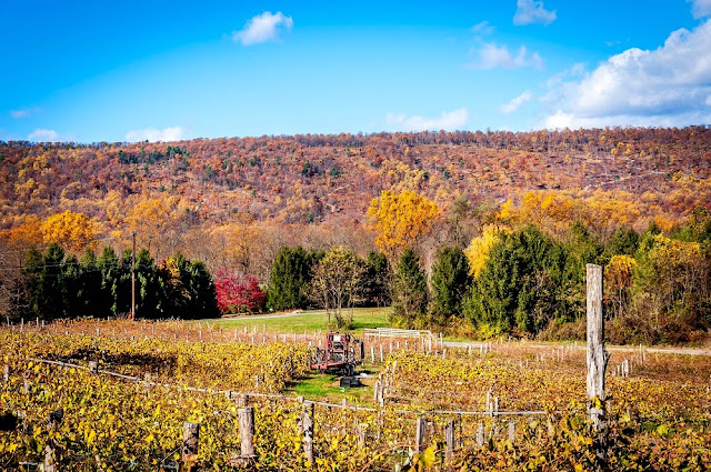 Fall Colors at the Buddy Boy Winery in the Hershey-Harrisburg Wine Country